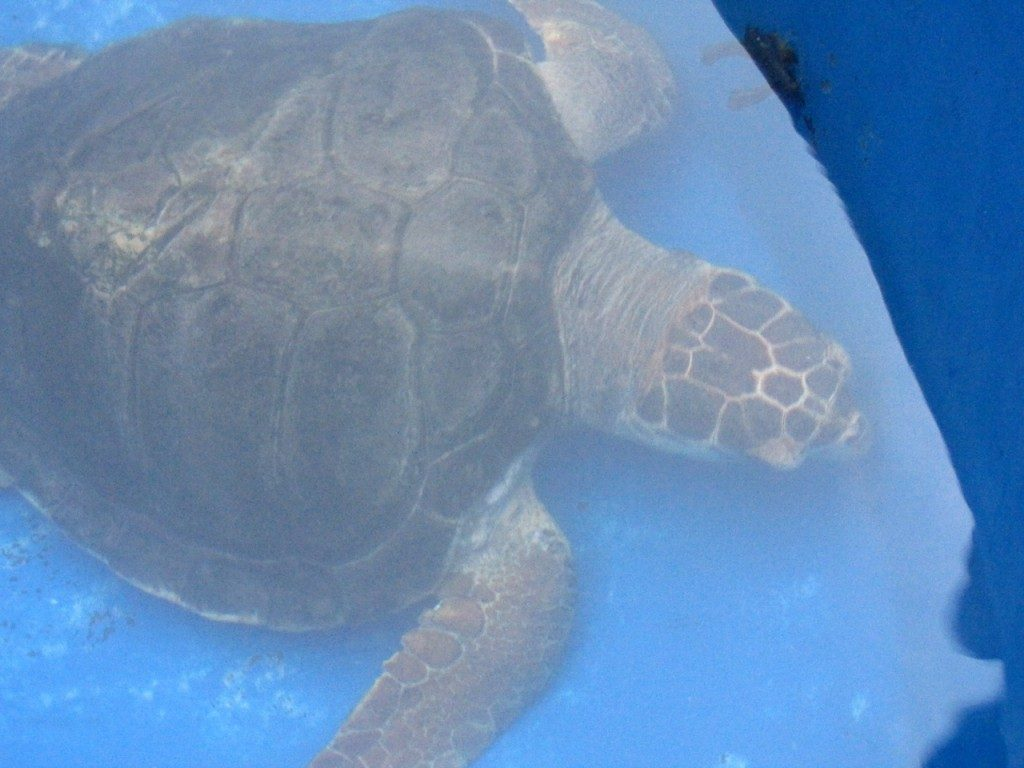 Turtle Rescue Centre (WWF)
