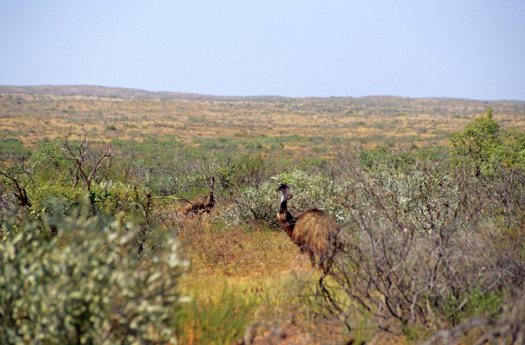 Bush - Cape Range Park