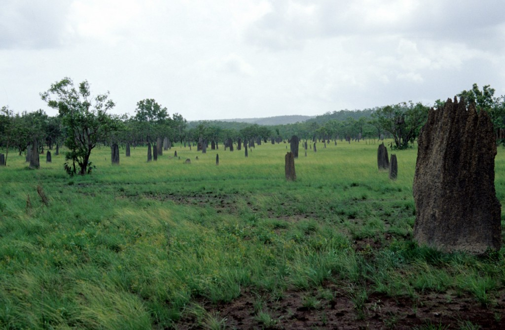 Termite mounds - Lichfield National Park